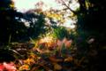 秋色ディスプレイ