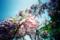 枝垂れる花
