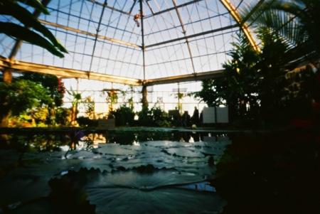 温熱密林の鏡映