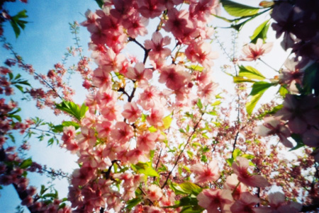 春色の到来