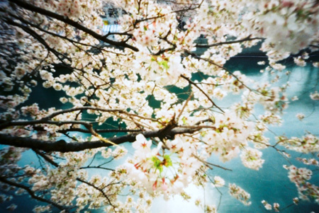 春に輝く花冠