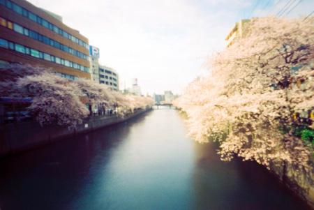 流れる桜雲