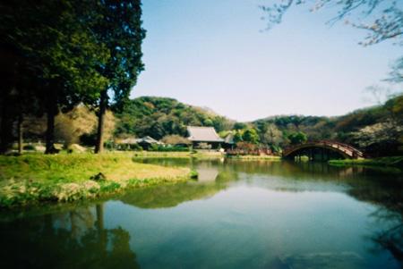 桜花の称名寺