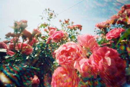 情熱の赤い薔薇