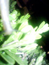 f:id:aotoao:20110823032521j:image