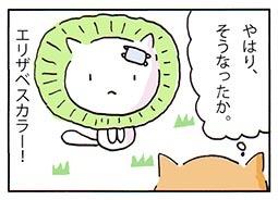 kayui3.jpg