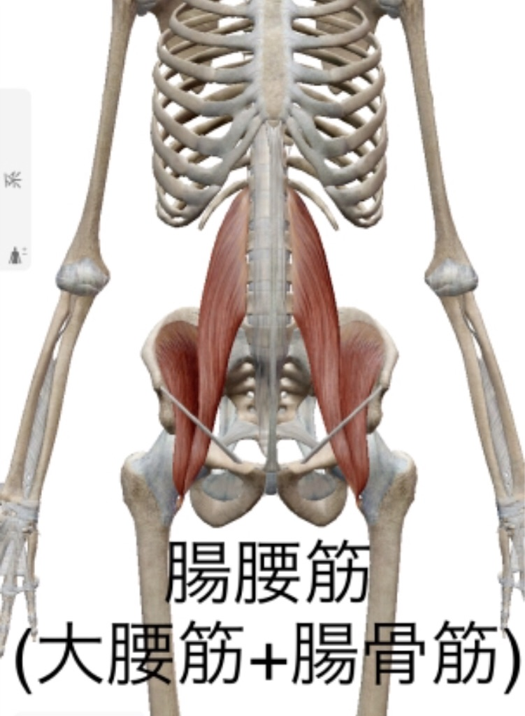 f:id:aoyagiphysical:20200701101508j:plain