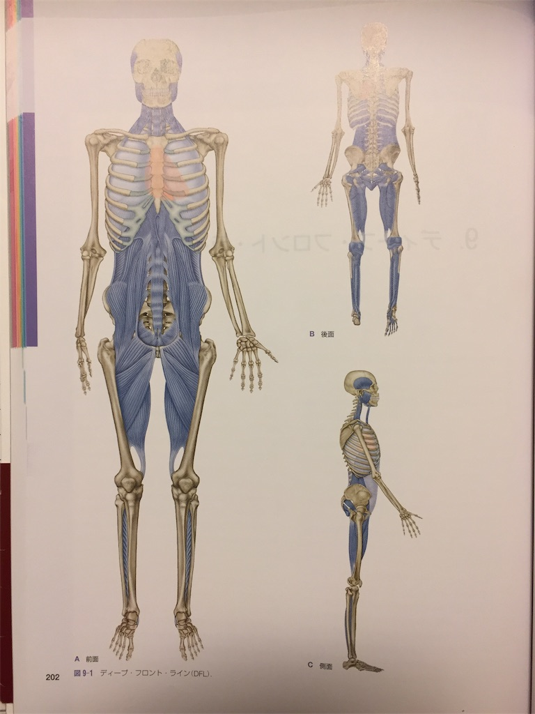 f:id:aoyagiphysical:20200825225922j:plain