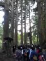 芦ノ湖 杉並木
