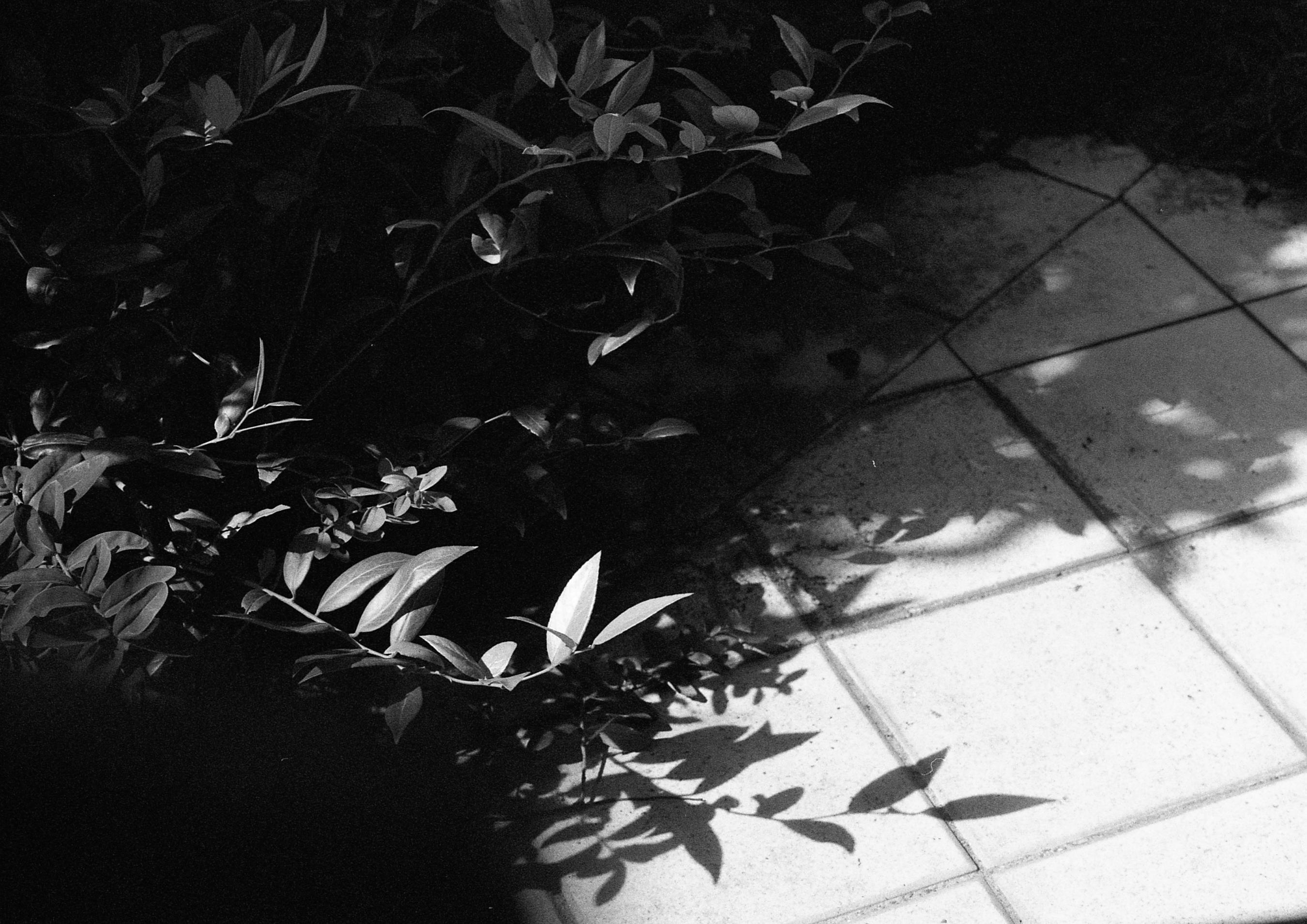 f:id:aoyama-takuro:20180727212713j:plain