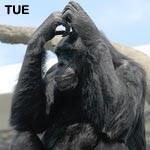 f:id:apesnotmonkeys:20081226100455j:image:right