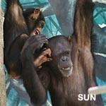 f:id:apesnotmonkeys:20081226100549j:plain