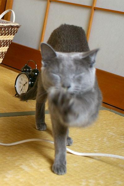 f:id:apesnotmonkeys:20110129145717j:image