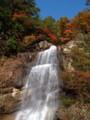 [滝][紅葉]紅葉川渓谷に落ちる滝