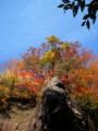 [山][紅葉]紅葉川渓谷の紅葉