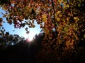 [山][紅葉]紅葉川渓谷