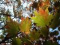[山][紅葉]達居森の紅葉
