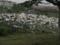多賀城の瓦礫置き場