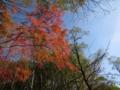 [紅葉]紅葉