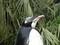ペンギン像
