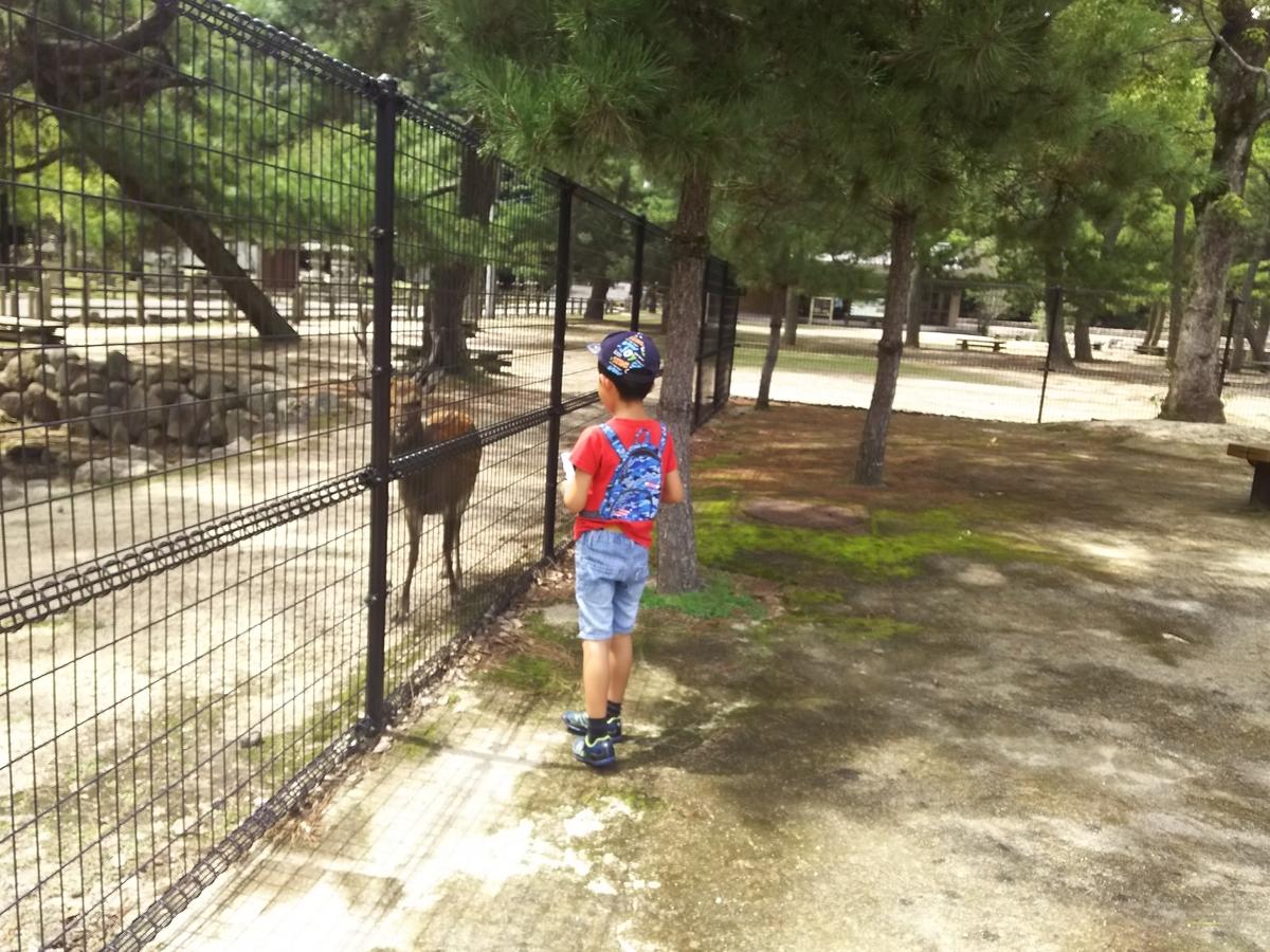 長男、鹿撮影中(3DSで)