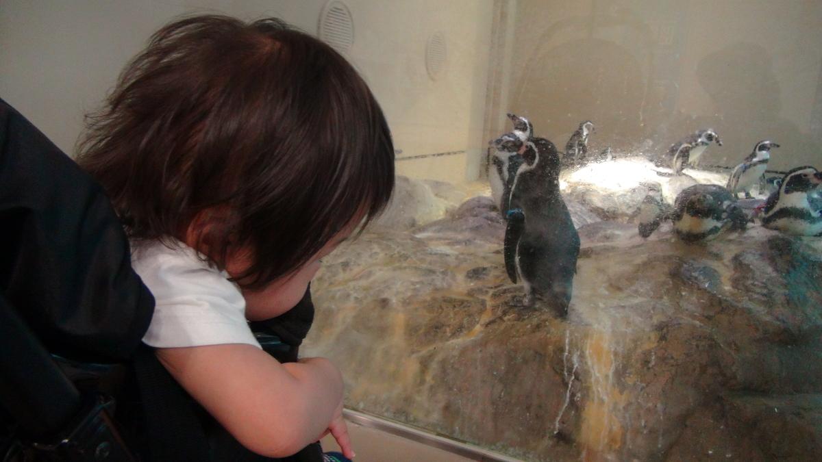 次男坊とマゼランペンギン