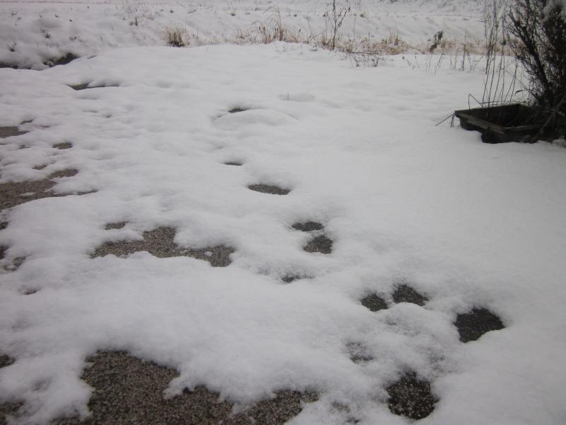 うちの庭に積もった雪
