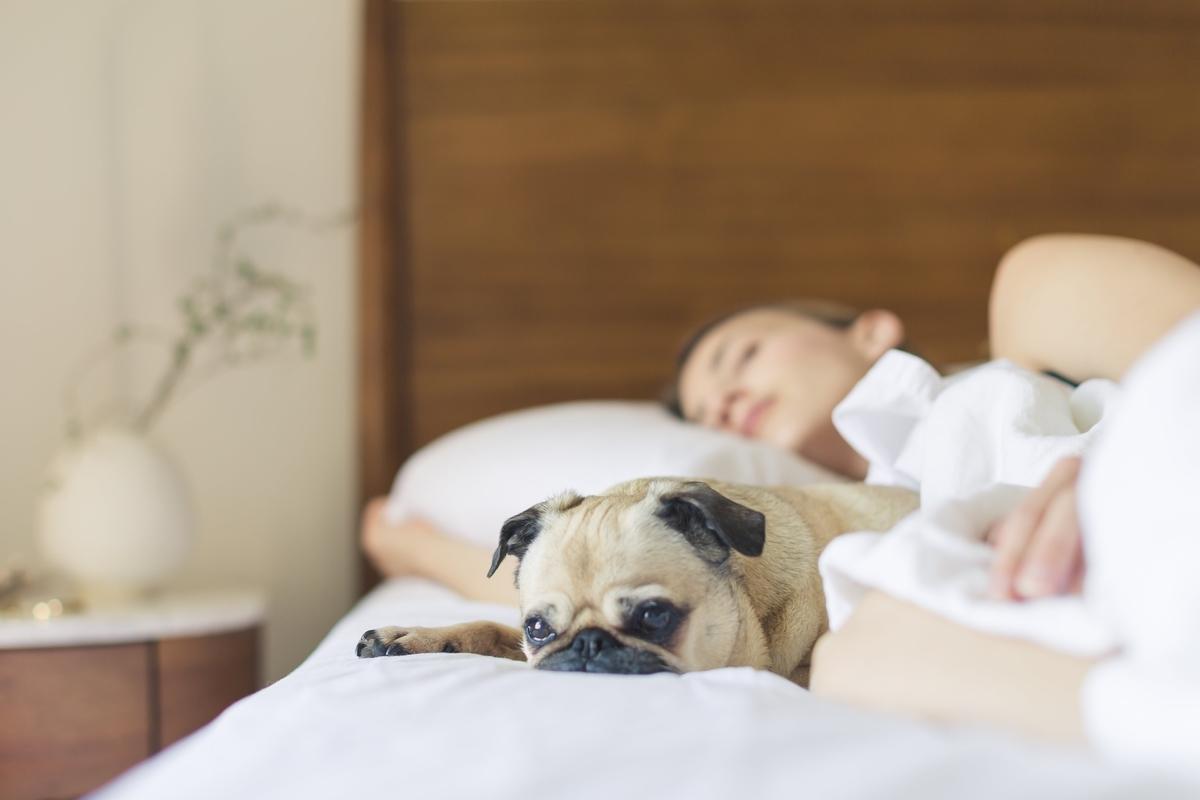 女性、寝ている、ベット、犬