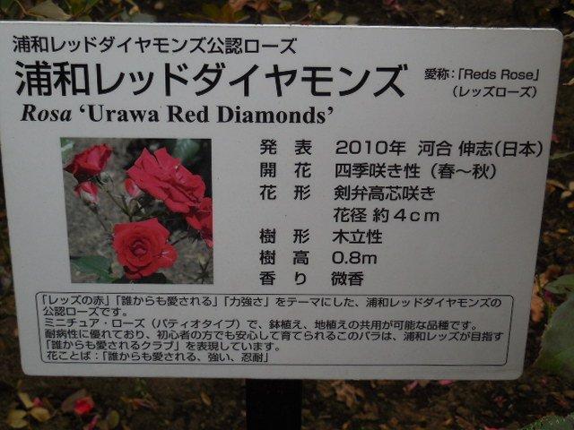埼玉スタジアム2002公園 レッズ ローズ