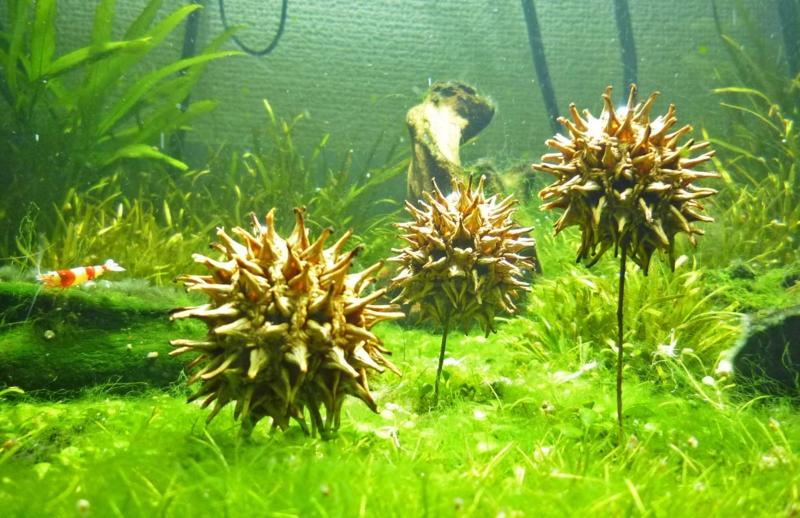 f:id:aquarin:20150226162524j:image