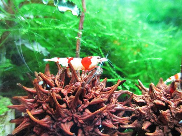 f:id:aquarin:20150310103001j:image