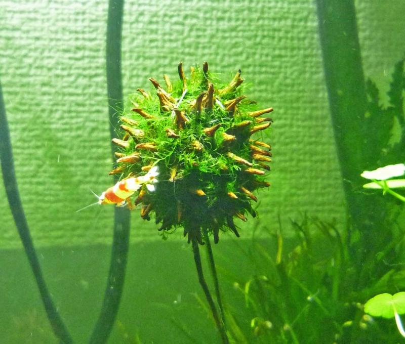 f:id:aquarin:20150310105156j:image:w750