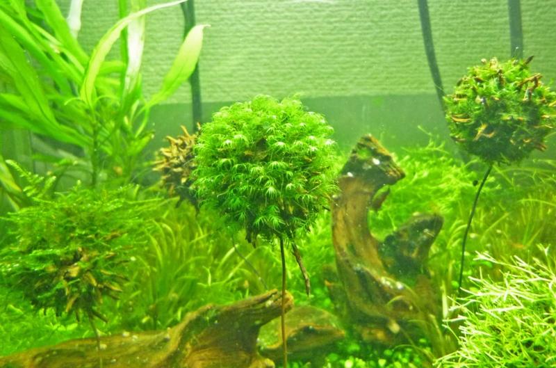 f:id:aquarin:20150401173113j:image:w750