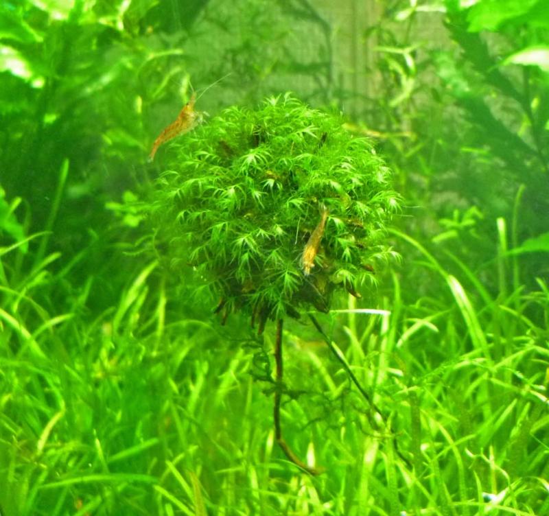 f:id:aquarin:20150401182409j:image