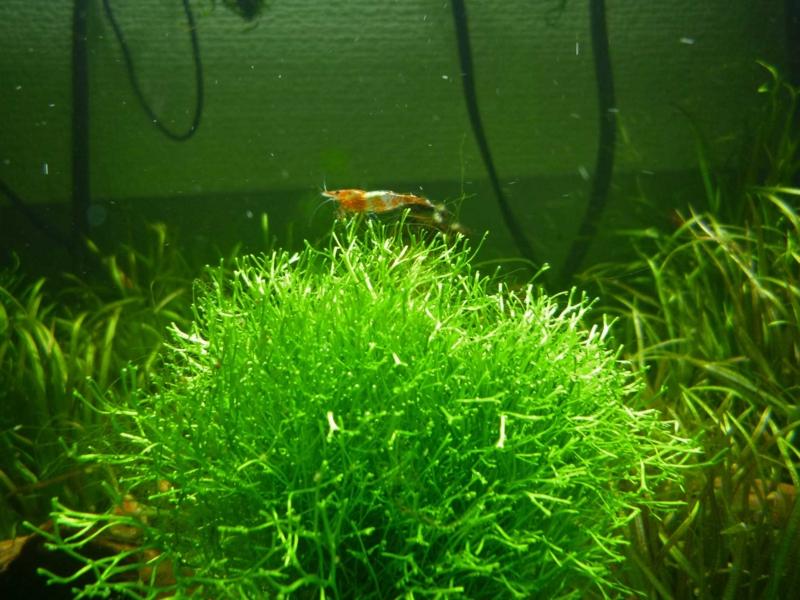 f:id:aquarin:20150426171833j:image