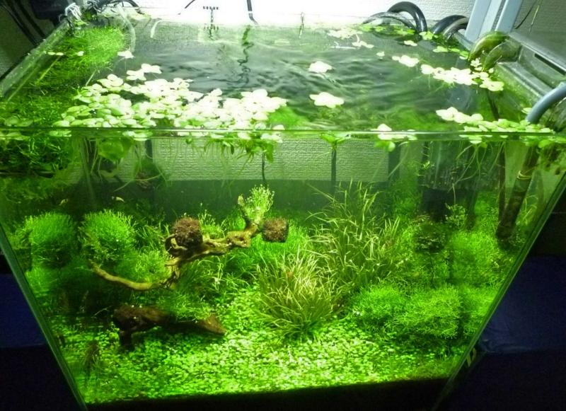 f:id:aquarin:20150516183958j:image