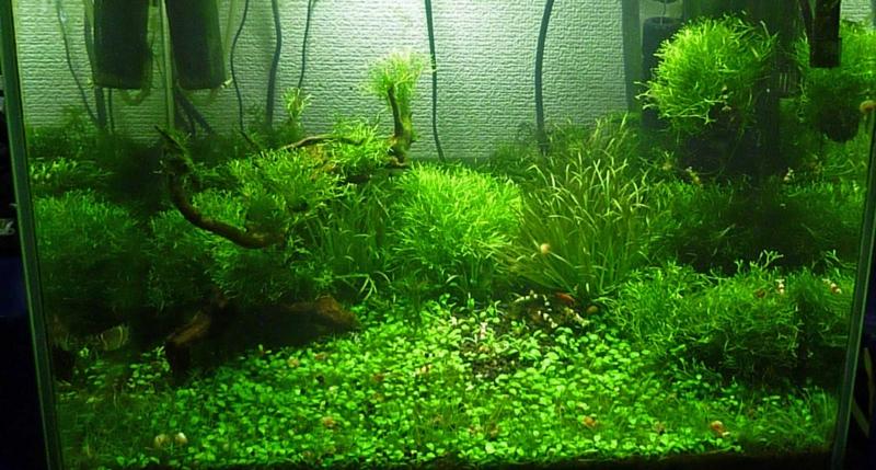 f:id:aquarin:20150530054156j:image