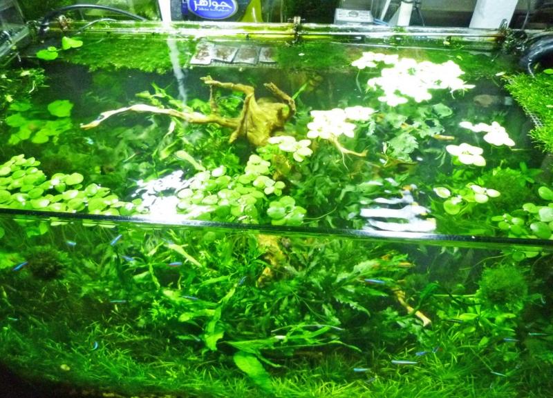 f:id:aquarin:20150531204317j:image:w750