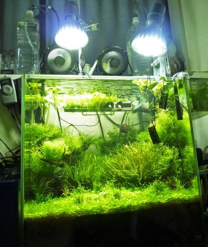 f:id:aquarin:20150721212750j:image:w600