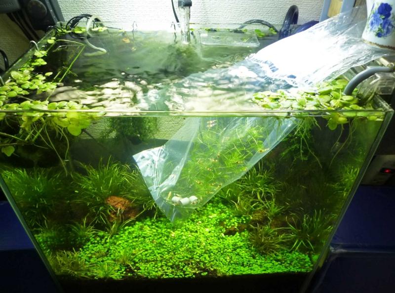 f:id:aquarin:20160127112941j:image