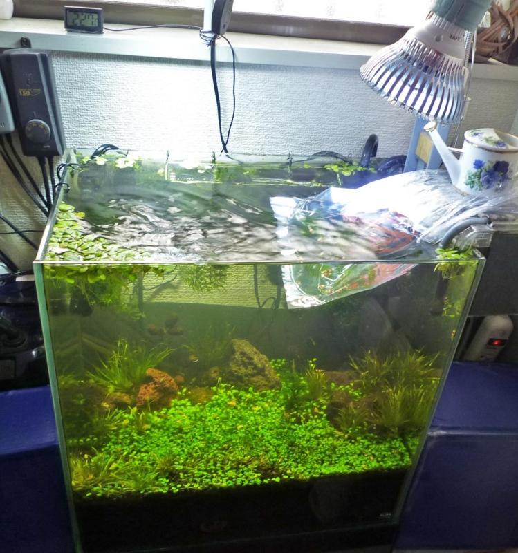 f:id:aquarin:20160207111027j:image:w600