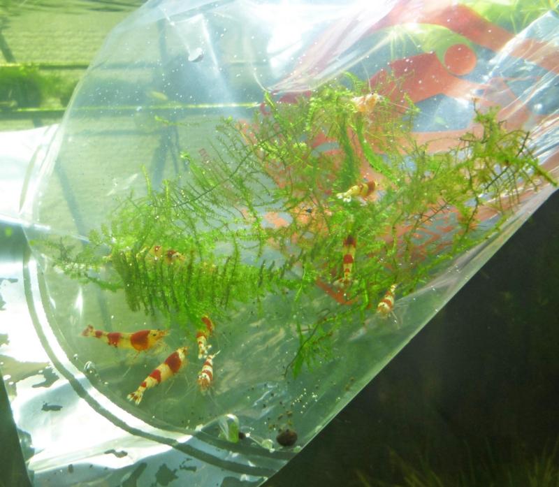 f:id:aquarin:20160207111028j:image