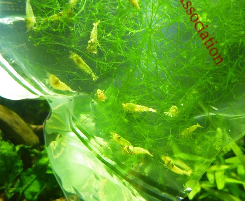 f:id:aquarin:20160701185559j:image