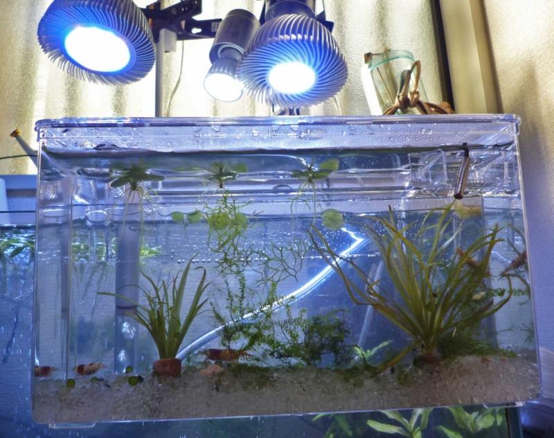 f:id:aquarin:20170127101415j:image