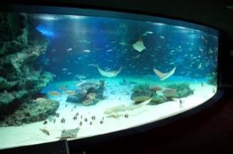f:id:aquariumnews:20170416221509j:plain