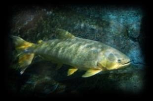 f:id:aquariumnews:20170416222324p:plain