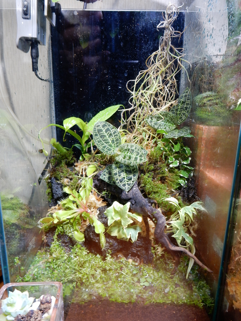 f:id:aquaticplants:20160629171818j:plain