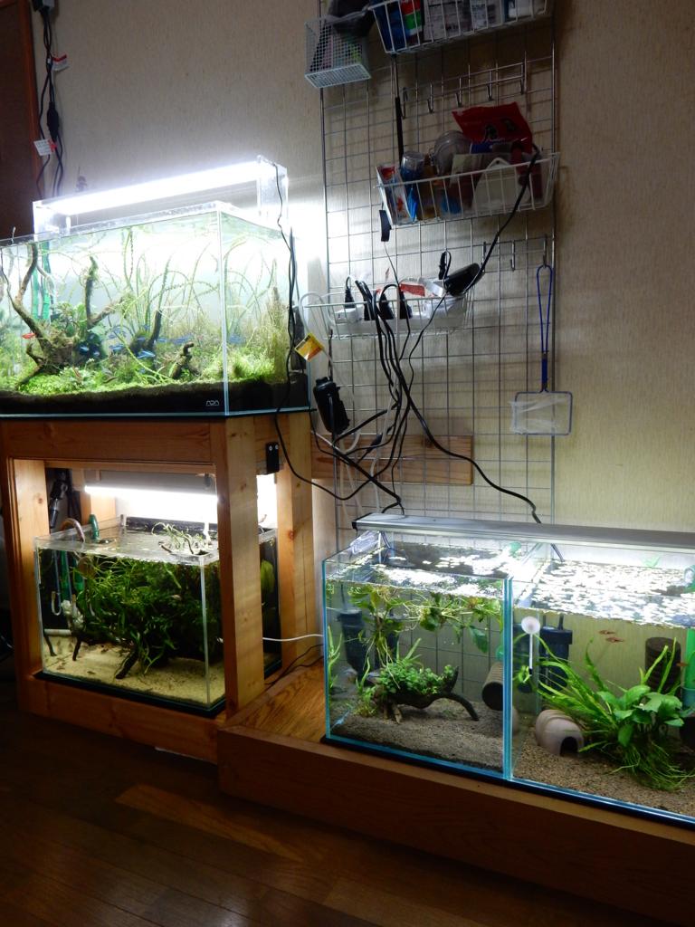 f:id:aquaticplants:20160925174115j:plain