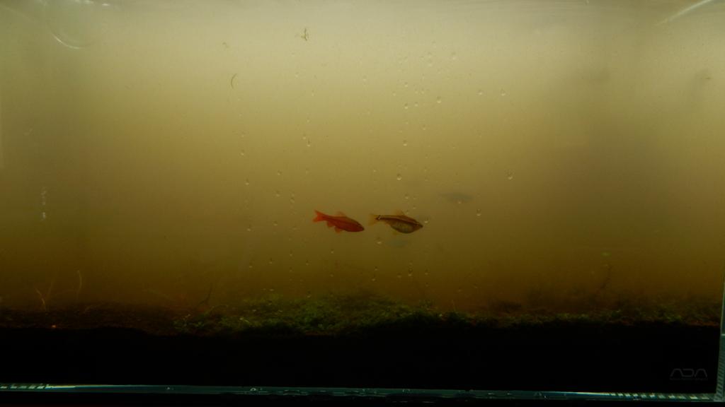 f:id:aquaticplants:20161010220519j:plain