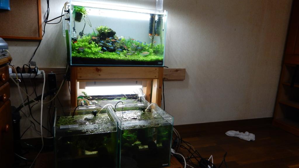 f:id:aquaticplants:20170507041611j:plain
